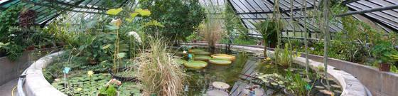jardin botanique serre de bary universit de strasbourg. Black Bedroom Furniture Sets. Home Design Ideas