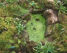Jardin botanique plantations dans la tourbi re universit de strasbourg - Bassin plantes oxygenantes besancon ...